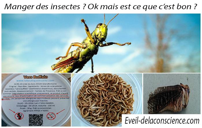 1_Manger des insectes ? Ok mais est ce que c'est bon ? copie