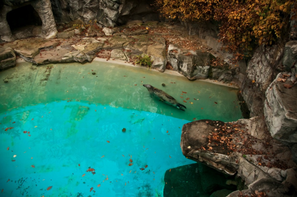11_Animal - La souffrance des animaux de zoo capturée à travers le monde