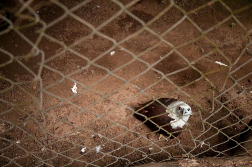 13_Animal - La souffrance des animaux de zoo capturée à travers le monde