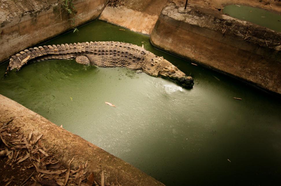 15_Animal - La souffrance des animaux de zoo capturée à travers le monde